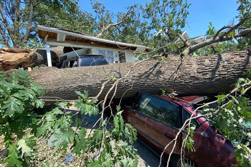 Photo of large tree down on a car